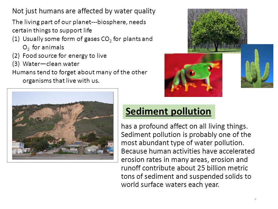 Not just humans are affected by water quality The living part of our planet---biosphere, needs certain things to support life (1)Usually some form of
