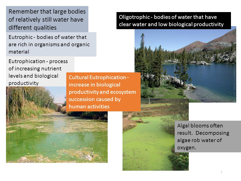 Remember that large bodies of relatively still water have different qualities Eutrophic - bodies of water that are rich in organisms and organic mater