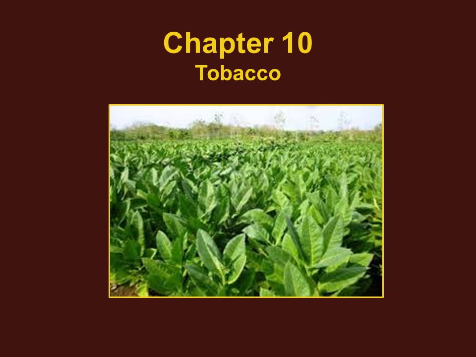 Chapter 10 Tobacco