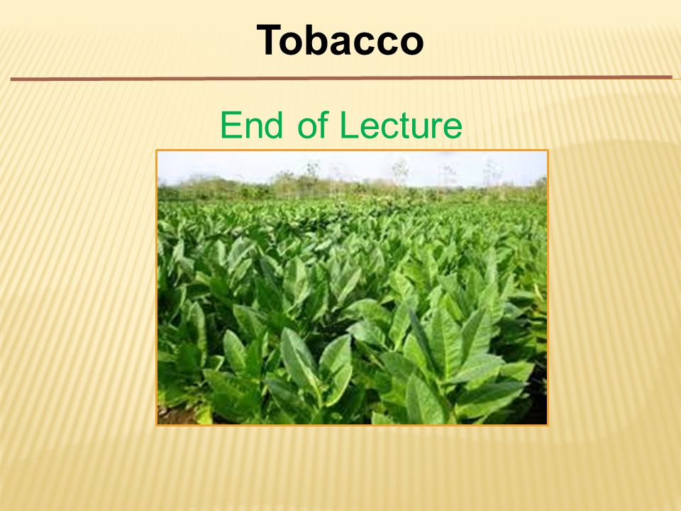 Tobacco End of Lecture
