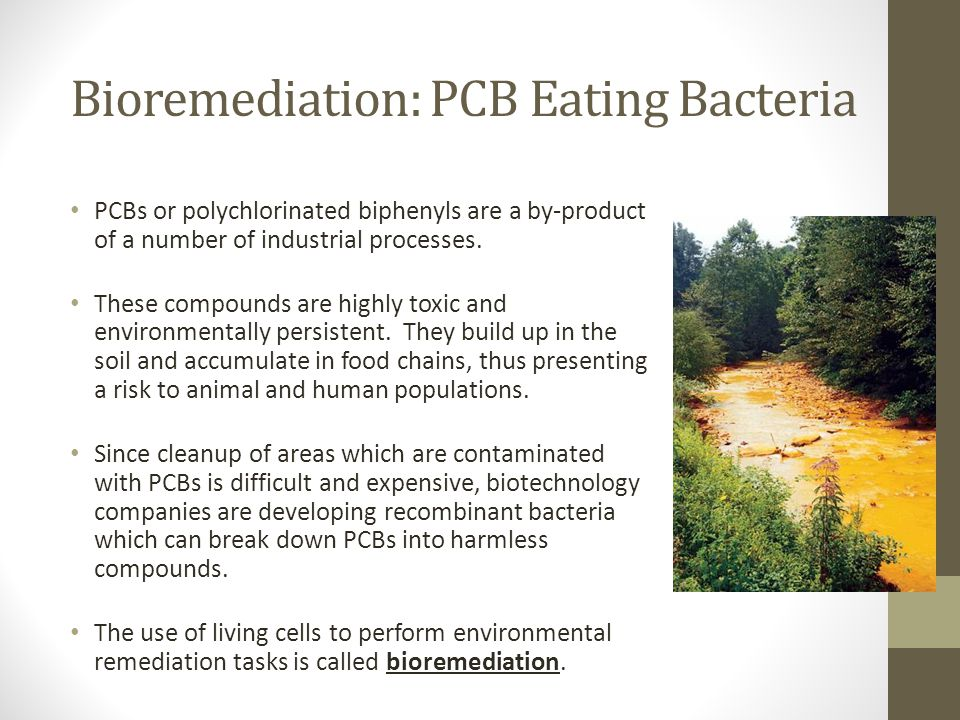 Bioremediation: PCB Eating Bacteria PCBs or polychlorinated biphenyls are a by-product of a number of industrial processes. These compounds are highly