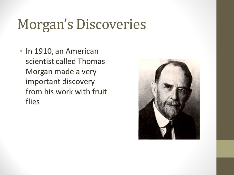 Morgan's Discoveries In 1910, an American scientist called Thomas Morgan made a very important discovery from his work with fruit flies