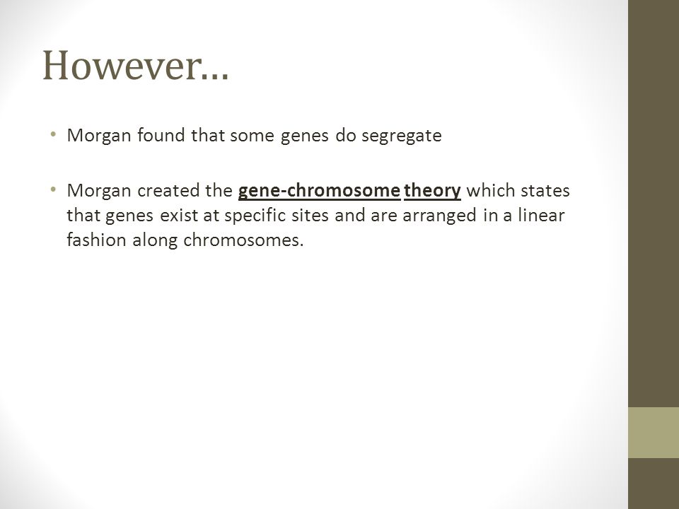 However… Morgan found that some genes do segregate Morgan created the gene-chromosome theory which states that genes exist at specific sites and are a