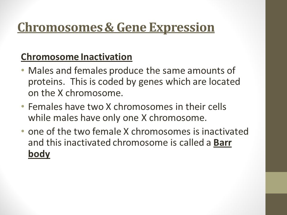 Chromosomes & Gene Expression Chromosome Inactivation Males and females produce the same amounts of proteins. This is coded by genes which are located