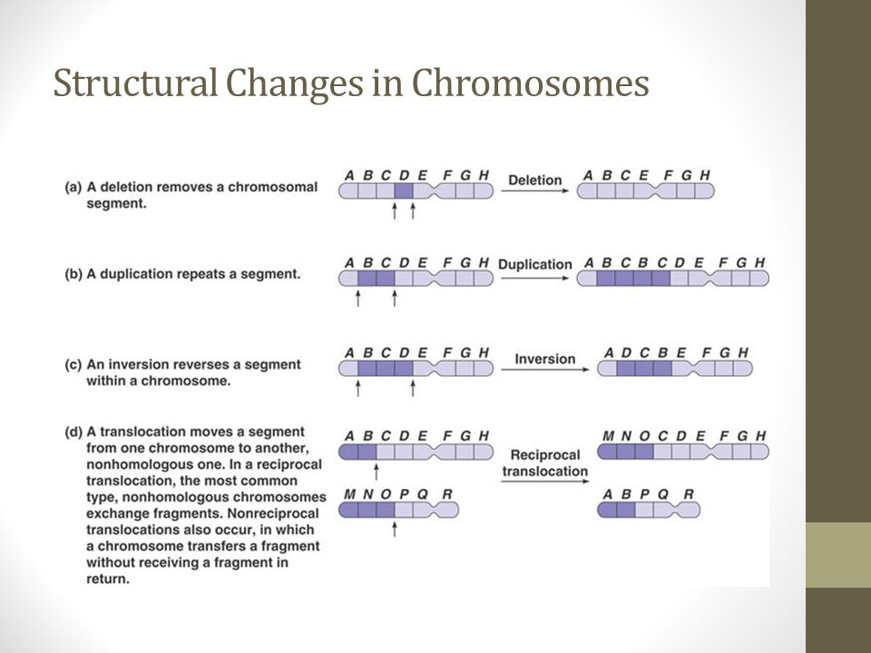 Structural Changes in Chromosomes