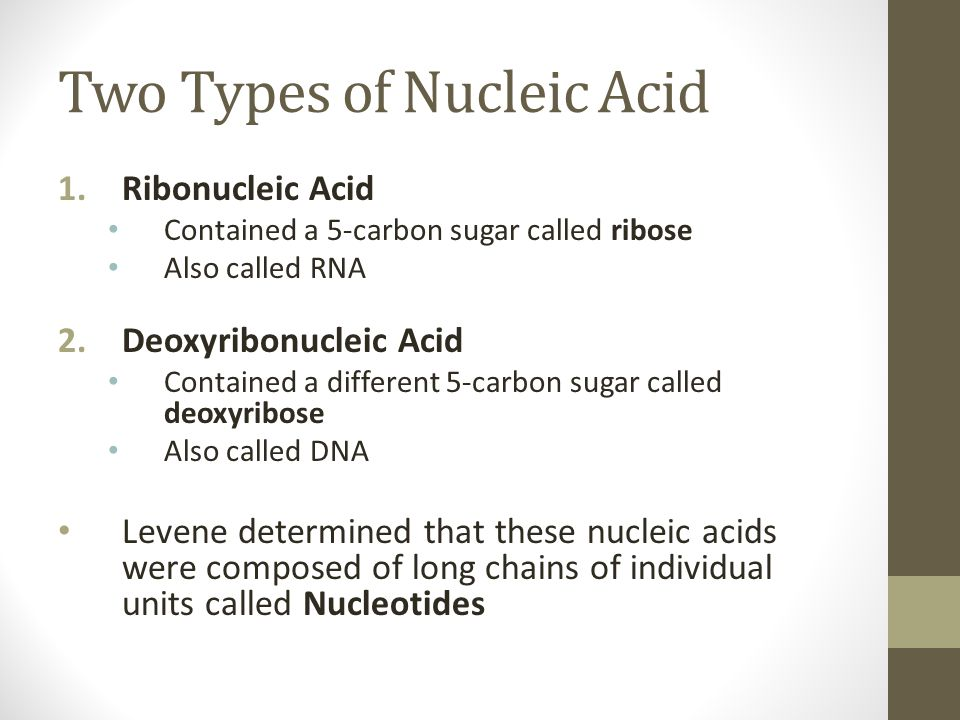 Two Types of Nucleic Acid 1.Ribonucleic Acid Contained a 5-carbon sugar called ribose Also called RNA 2.Deoxyribonucleic Acid Contained a different 5-