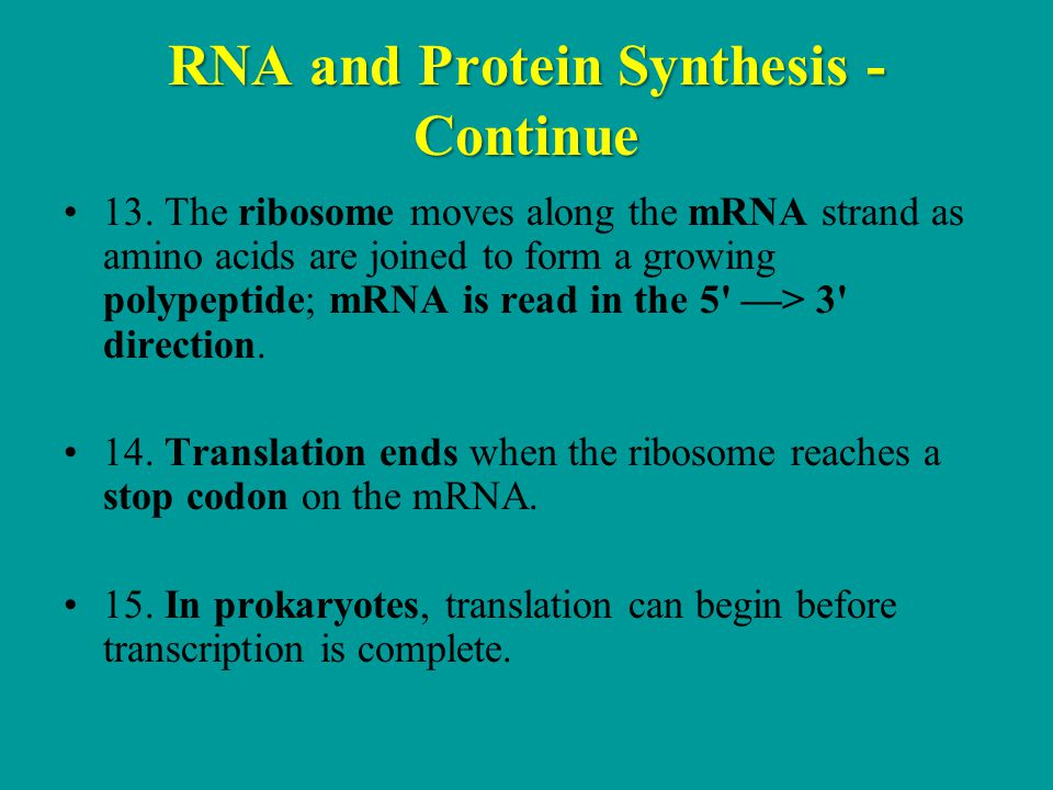 RNA and Protein Synthesis - Continue 13.