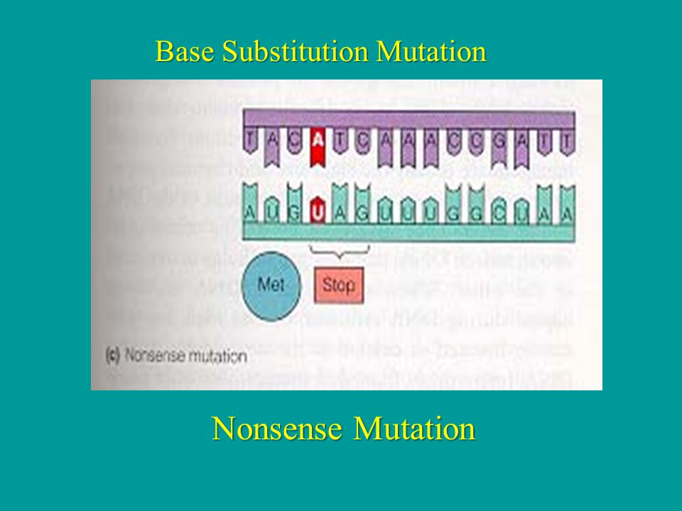 Nonsense Mutation Base Substitution Mutation