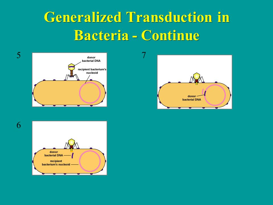 Generalized Transduction in Bacteria - Continue 5 7 6