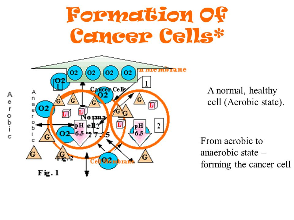 Formation Of Cancer Cells* A normal, healthy cell (Aerobic state).