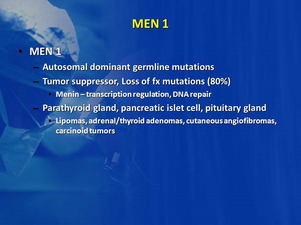 MEN 1 MEN 1 MEN 1 – Autosomal dominant germline mutations – Tumor suppressor, Loss of fx mutations (80%) Menin – transcription regulation, DNA repair