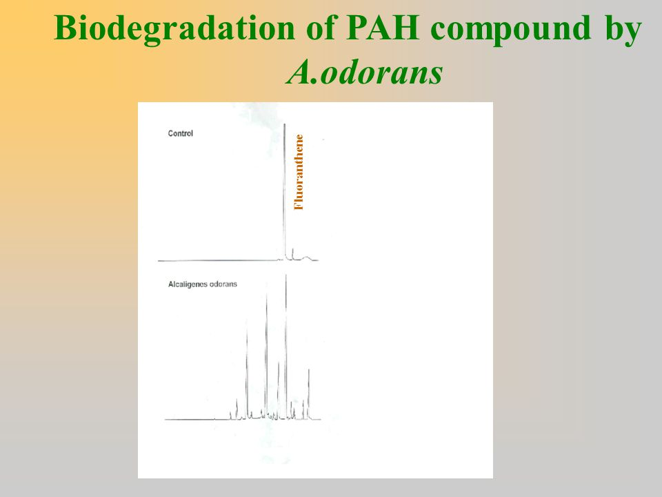Biodegradation of PAH compound by A.odorans Fluoranthene