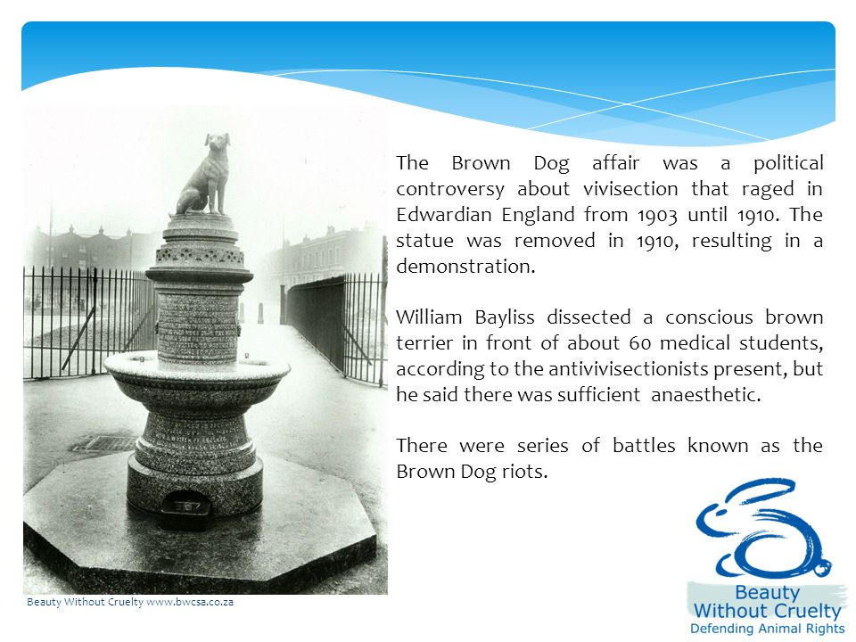 Beauty Without Cruelty www.bwcsa.co.za The Brown Dog affair was a political controversy about vivisection that raged in Edwardian England from 1903 until 1910.