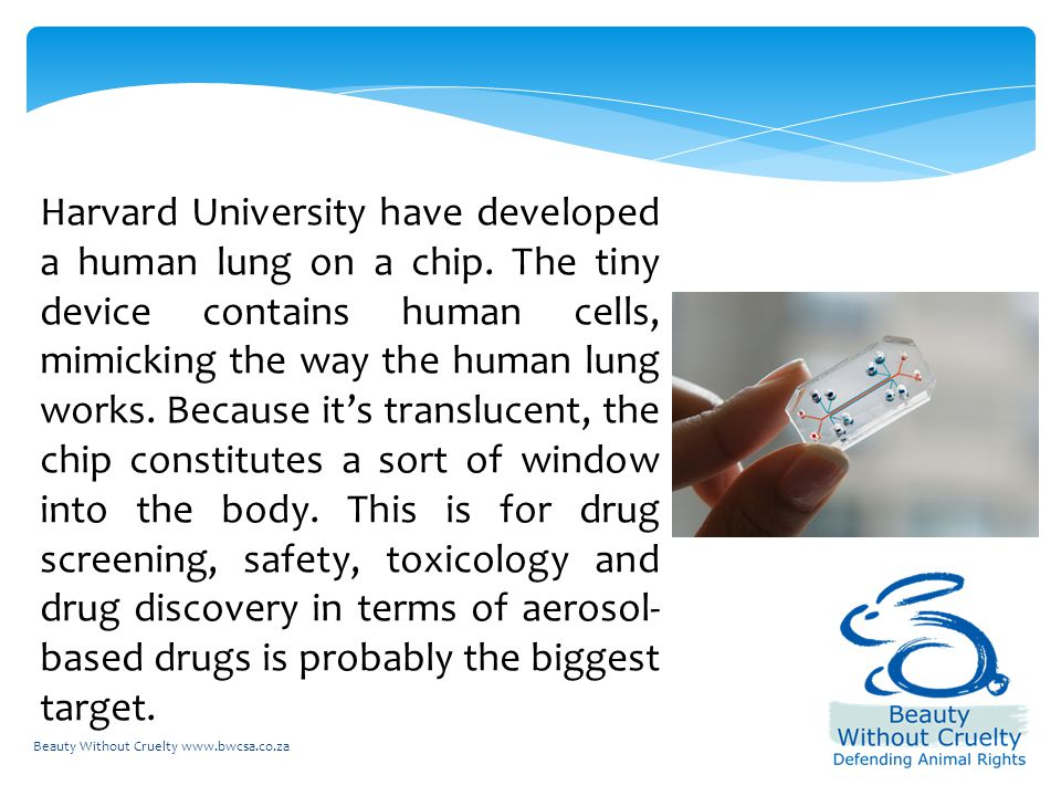 Harvard University have developed a human lung on a chip.