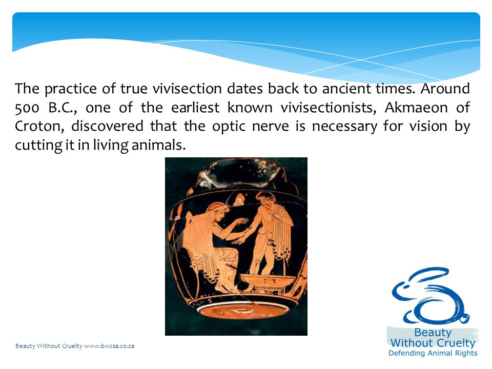 Beauty Without Cruelty www.bwcsa.co.za The practice of true vivisection dates back to ancient times.
