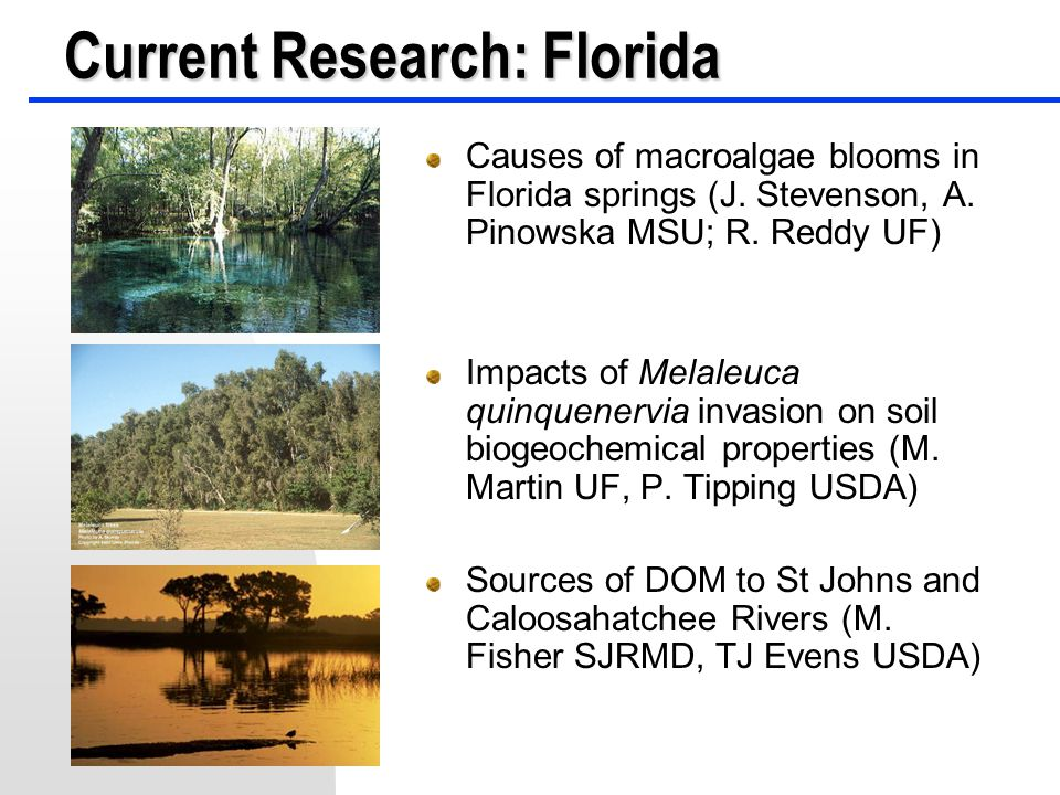 Causes of macroalgae blooms in Florida springs (J. Stevenson, A. Pinowska MSU; R. Reddy UF) Impacts of Melaleuca quinquenervia invasion on soil biogeo