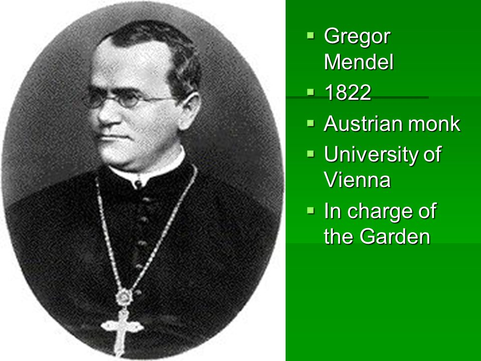  Gregor Mendel  1822  Austrian monk  University of Vienna  In charge of the Garden