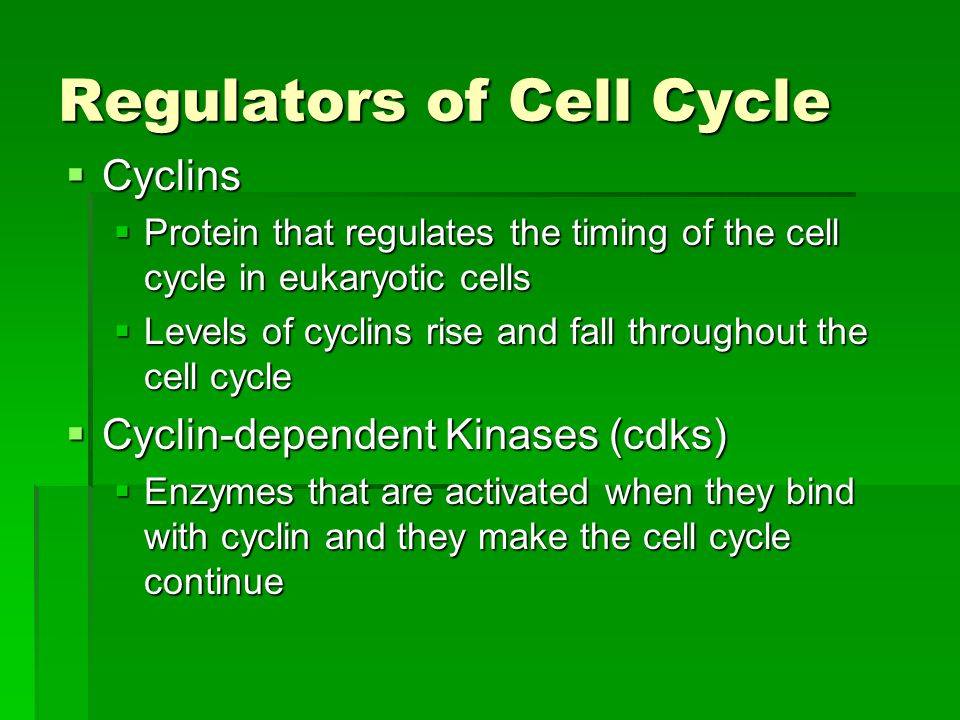 Regulators of Cell Cycle  Cyclins  Protein that regulates the timing of the cell cycle in eukaryotic cells  Levels of cyclins rise and fall throughout the cell cycle  Cyclin-dependent Kinases (cdks)  Enzymes that are activated when they bind with cyclin and they make the cell cycle continue