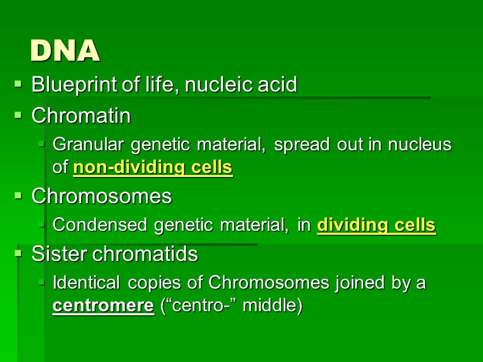 DNA  Blueprint of life, nucleic acid  Chromatin  Granular genetic material, spread out in nucleus of non-dividing cells  Chromosomes  Condensed genetic material, in dividing cells  Sister chromatids  Identical copies of Chromosomes joined by a centromere ( centro- middle)