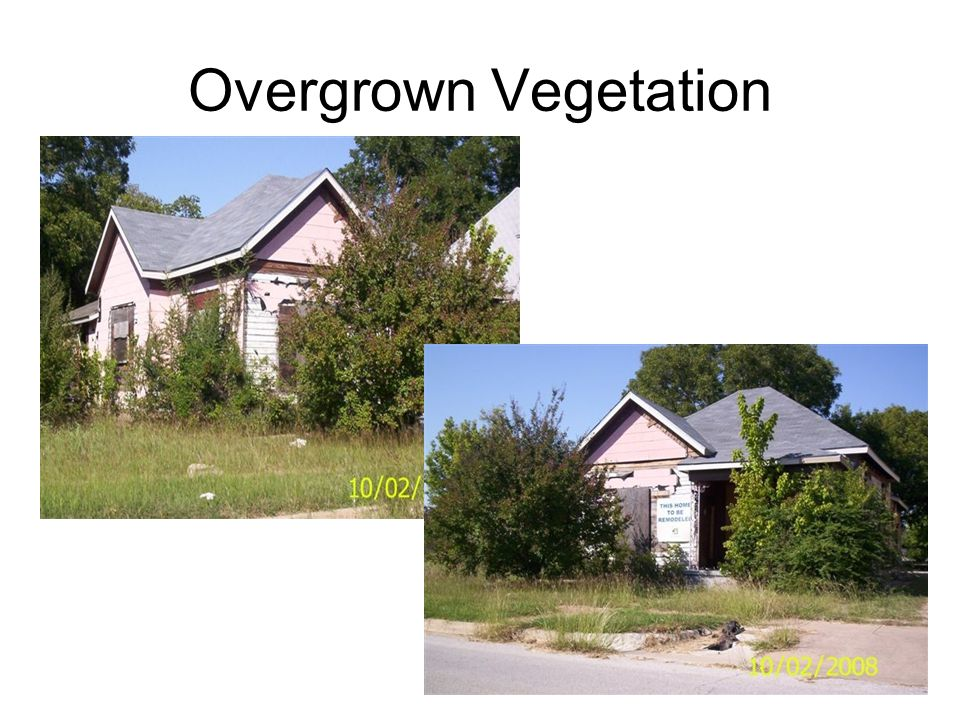 Overgrown Vegetation