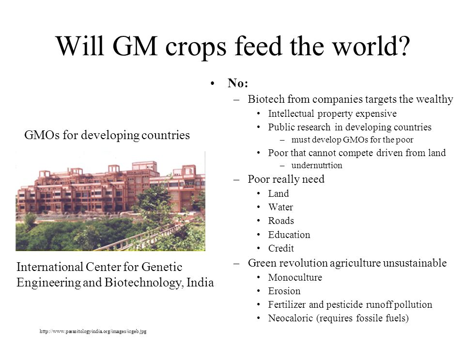 Will GM crops feed the world.