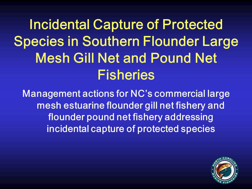 Incidental Capture of Protected Species in Southern Flounder Large Mesh Gill Net and Pound Net Fisheries Management actions for NC's commercial large