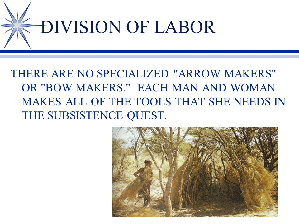 DIVISION OF LABOR THERE ARE NO SPECIALIZED