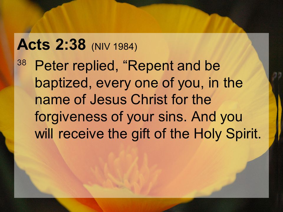 "04.15.201220 Acts 2:38 (NIV 1984) 38 Peter replied, ""Repent and be baptized, every one of you, in the name of Jesus Christ for the forgiveness of your"