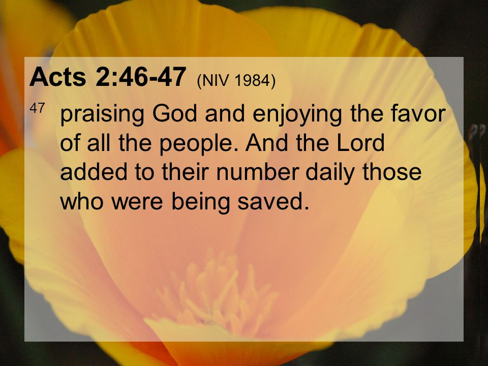 04.15.201241 Acts 2:46-47 (NIV 1984) 47 praising God and enjoying the favor of all the people. And the Lord added to their number daily those who were