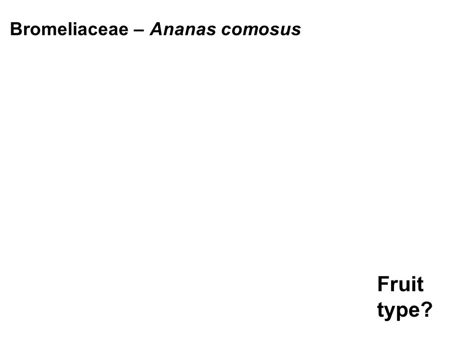 Bromeliaceae – Ananas comosus Fruit type