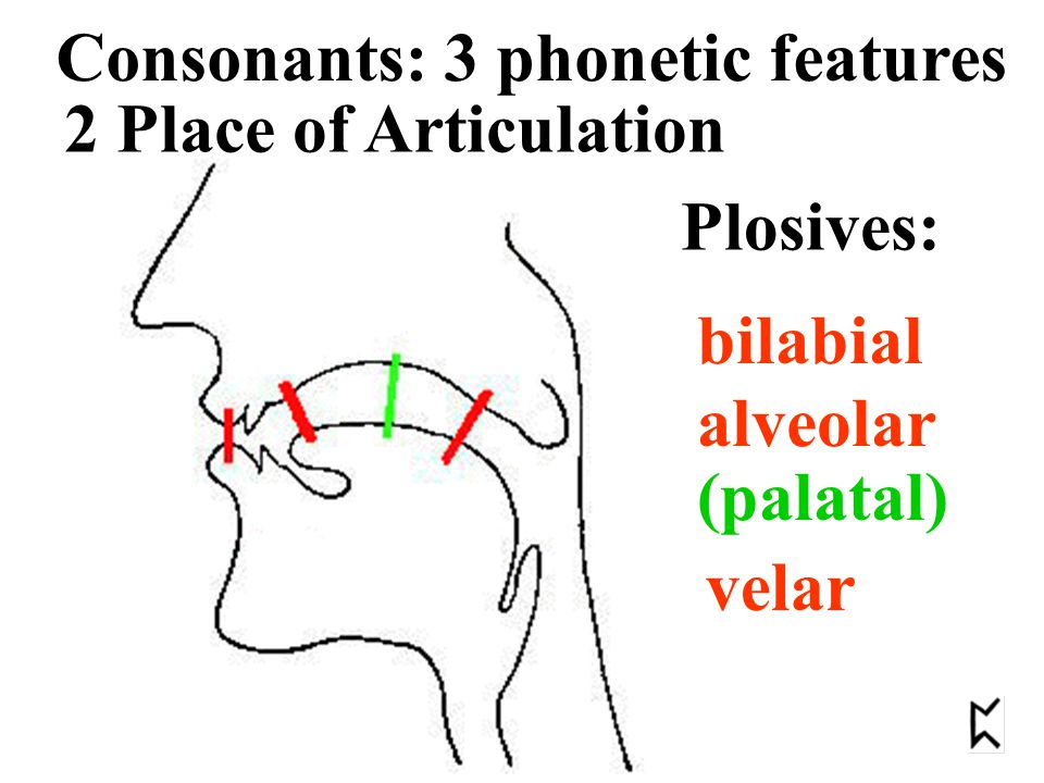 3 Voicing Consonants: 3 phonetic features Are the vocal chords vibrating or not? fortis lenis -