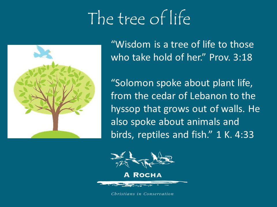 The tree of life Wisdom is a tree of life to those who take hold of her. Prov.
