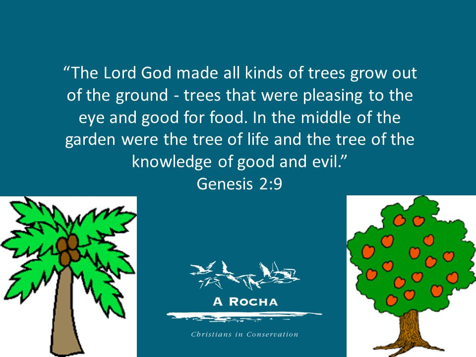 The Lord God made all kinds of trees grow out of the ground - trees that were pleasing to the eye and good for food.