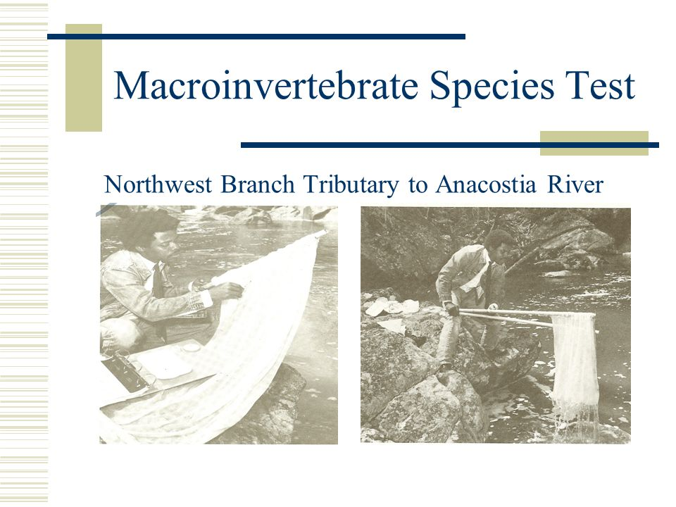 Macroinvertebrate Species Test Northwest Branch Tributary to Anacostia River