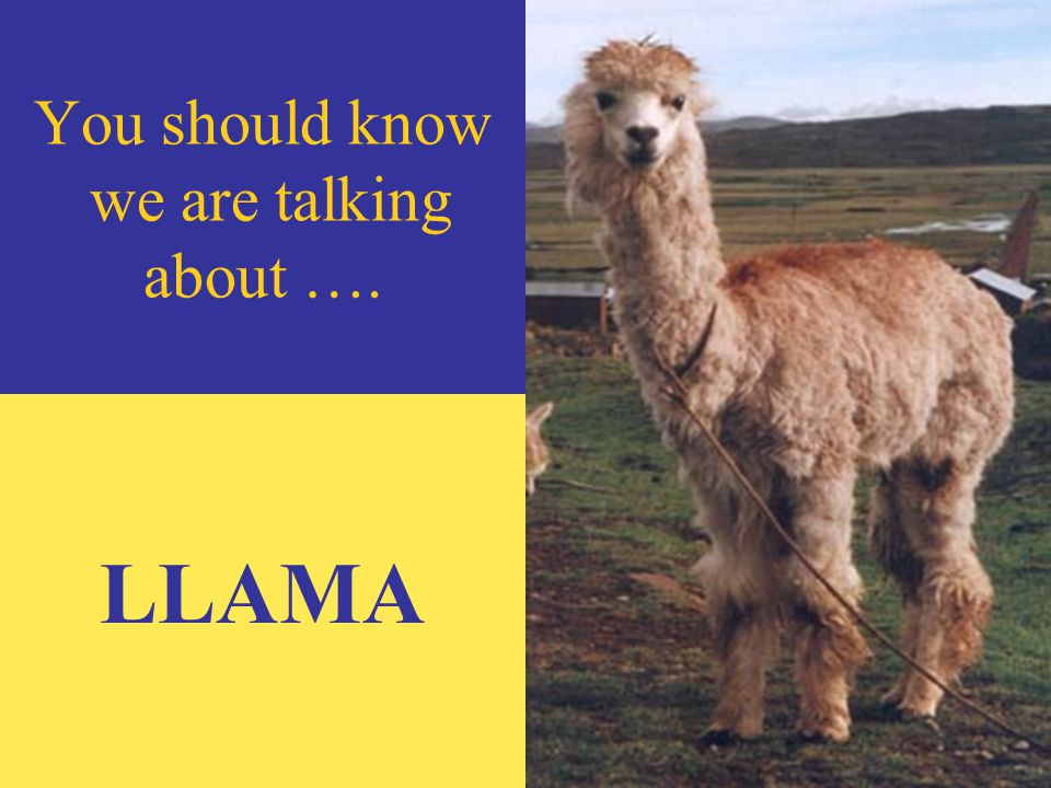 There are a lot of animal words that come from Quechua.