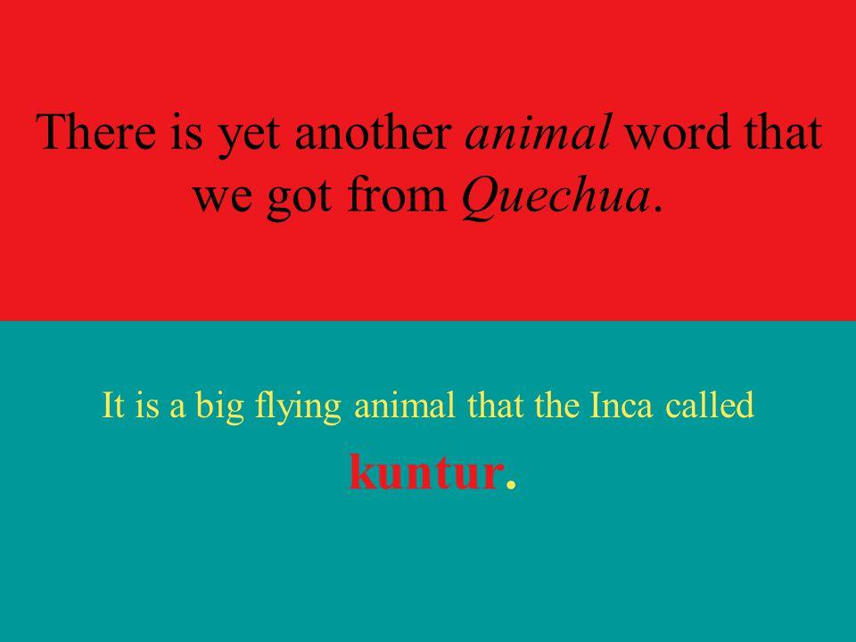 It is a … puma