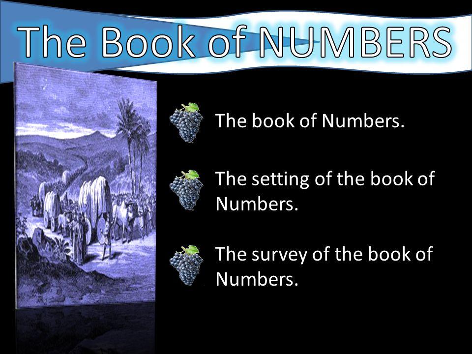 NUMBERSNUMBERS NUMBERSNUMBERS