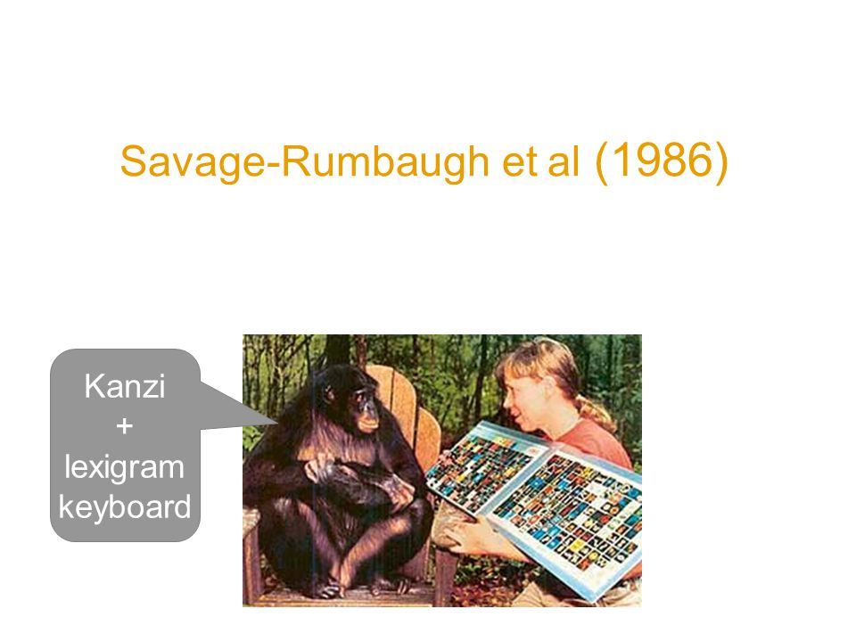 Savage-Rumbaugh et al (1986) Serendipitous observation Kanzi began to use symbols without training after he was separated from his mother identified symbols correctly and did not confuse them (e.g.