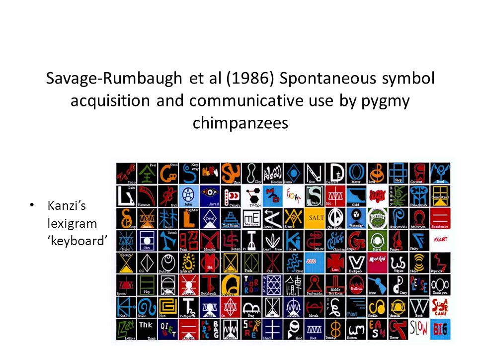 Savage-Rumbaugh et al (1986) Spontaneous symbol acquisition and communicative use by pygmy chimpanzees Kanzi's lexigram 'keyboard'