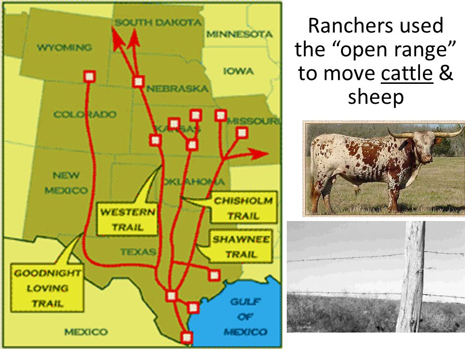 Ranchers used the open range to move cattle & sheep
