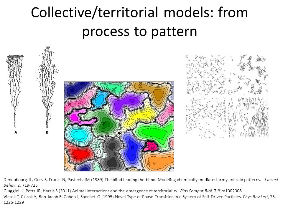 Collective/territorial models: from process to pattern Deneubourg JL, Goss S, Franks N, Pasteels JM (1989) The blind leading the blind: Modeling chemically mediated army ant raid patterns.