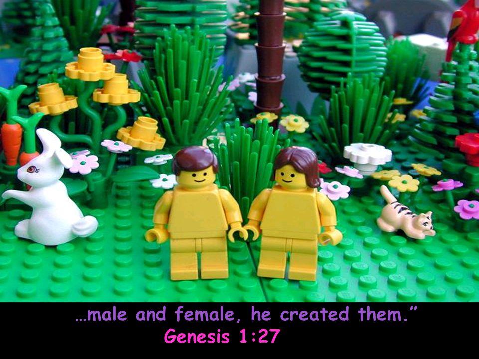 "…male and female, he created them."" Genesis 1:27 Genesis 1:27"