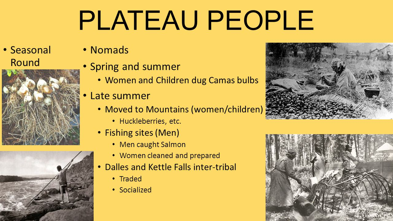 PLATEAU PEOPLE Seasonal Round Nomads Spring and summer Women and Children dug Camas bulbs Late summer Moved to Mountains (women/children) Huckleberrie