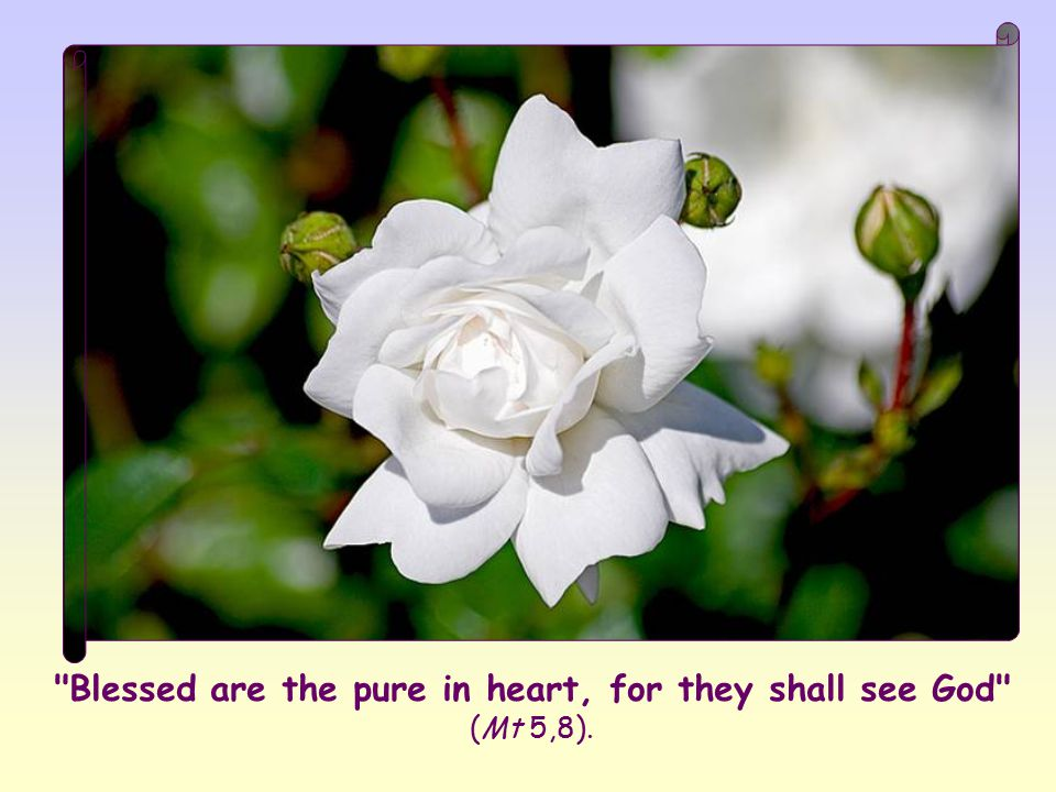 What kind of purity could be so sublime as to deserve so much? Jesus would explain it several times during the course of his preaching. Let's try to f
