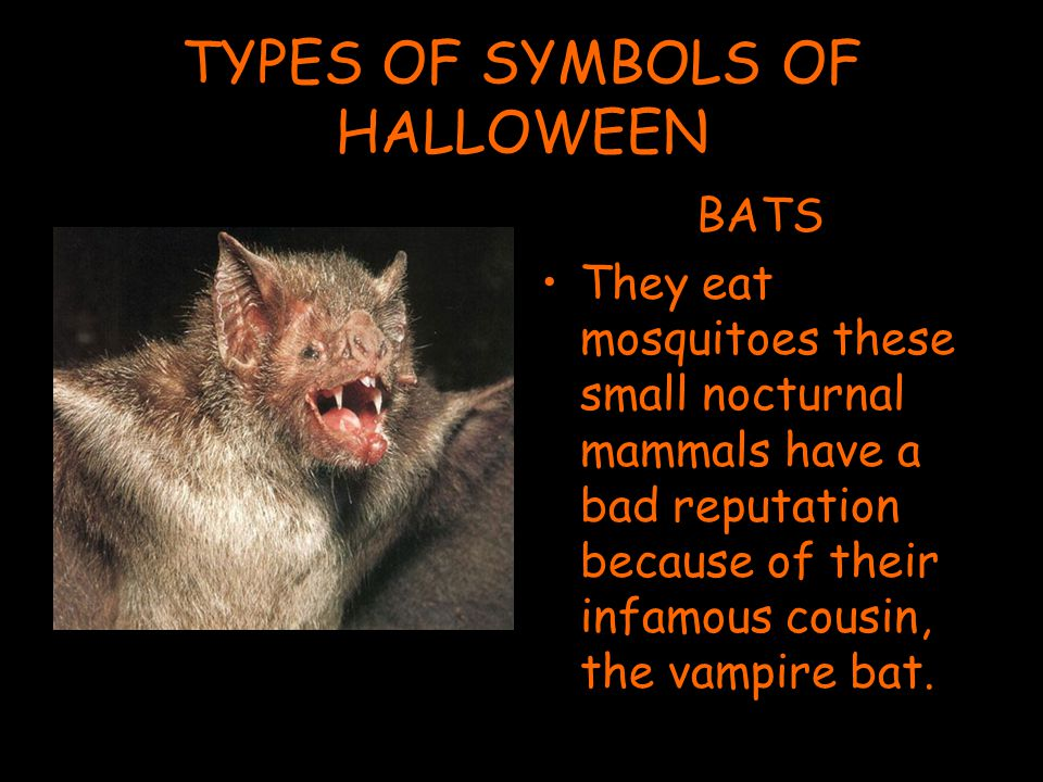 TYPES OF SYMBOLS OF HALLOWEEN BATS They eat mosquitoes these small nocturnal mammals have a bad reputation because of their infamous cousin, the vampire bat.