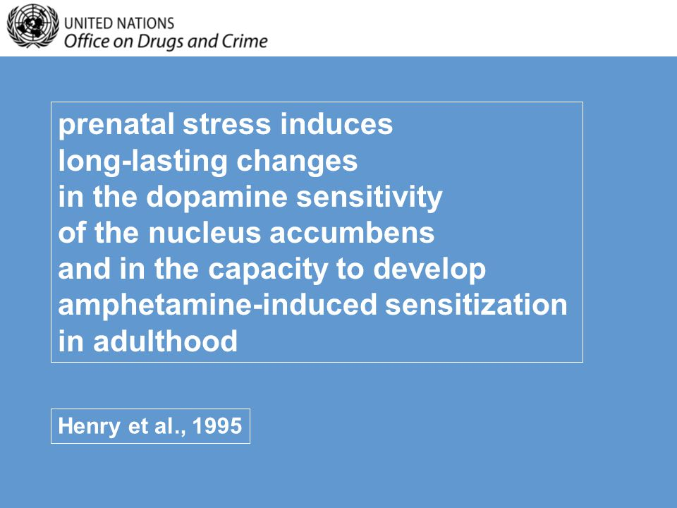 prenatal stress induces long-lasting changes in the dopamine sensitivity of the nucleus accumbens and in the capacity to develop amphetamine-induced sensitization in adulthood Henry et al., 1995