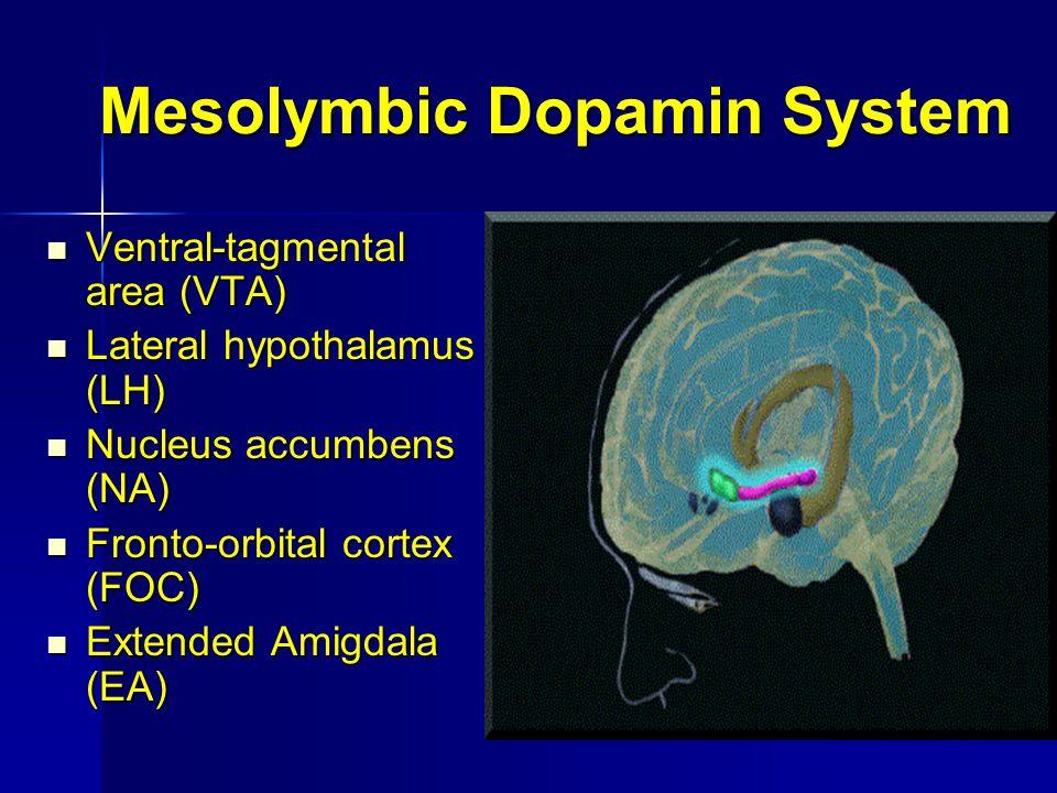 Mesolymbic Dopamin System Ventral-tagmental area (VTA) Ventral-tagmental area (VTA) Lateral hypothalamus (LH) Lateral hypothalamus (LH) Nucleus accumb