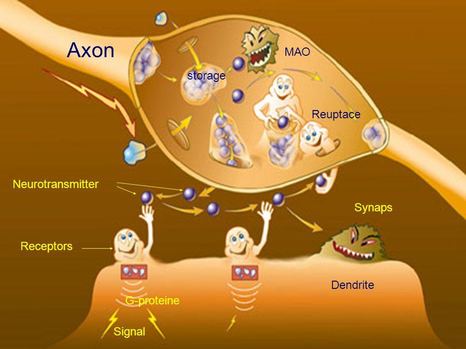 Axon Neurotransmitter Synaps Dendrite Receptors Reuptace МАО Signal storage G-proteine