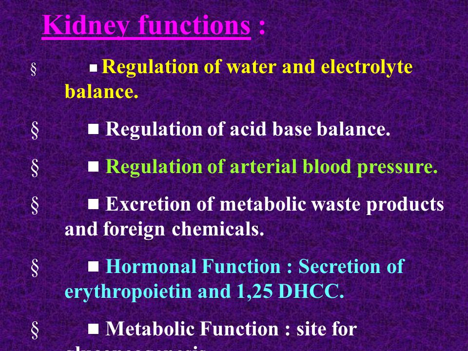 Kidney functions :   Regulation of water and electrolyte balance.