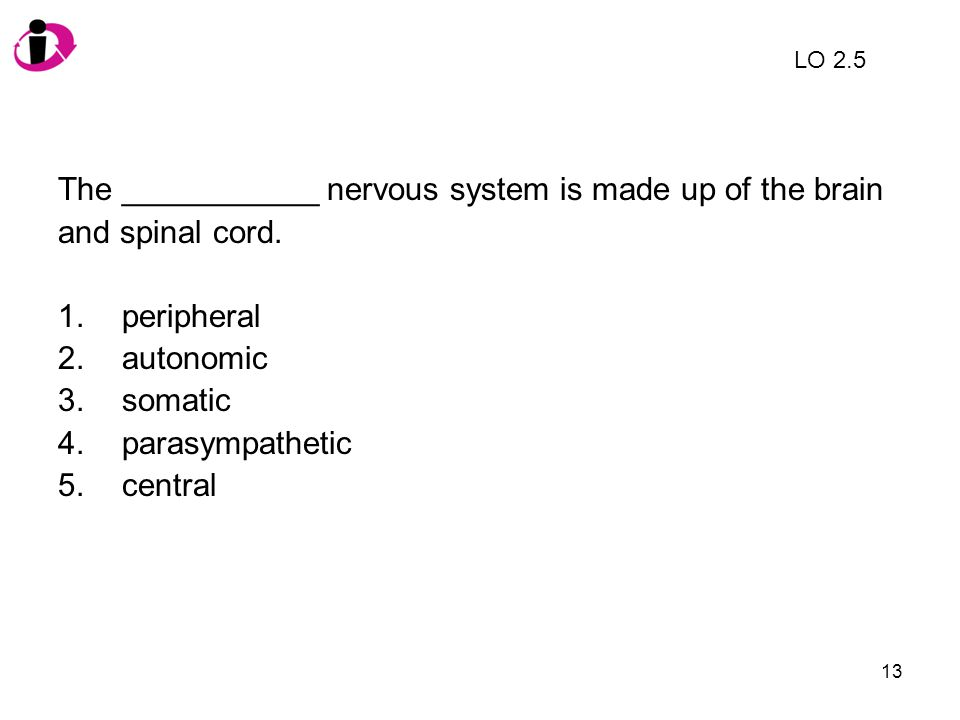 13 The ___________ nervous system is made up of the brain and spinal cord. 1.peripheral 2.autonomic 3.somatic 4.parasympathetic 5.central LO 2.5